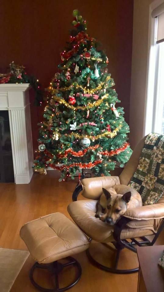 christmas tree ns