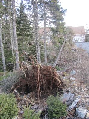 few trees blew over