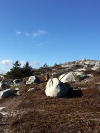 Polly's Cove wilderness