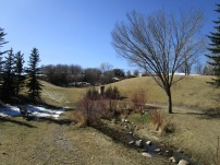 Nose Hill 26 (2)