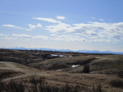 Nose Hill 26 (5)