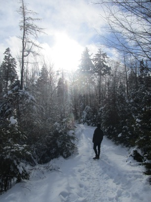 Sun shining on the hike
