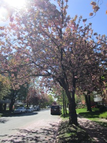 Kerrisdale Neighbourhood