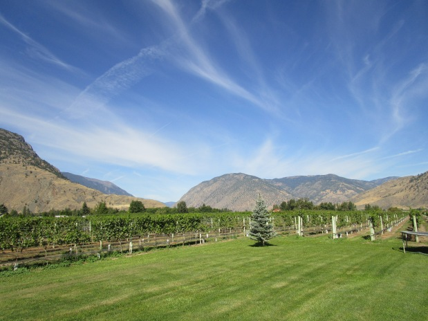 Cawston Vineyard