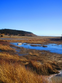 Lawrencetown Beach and Atlantic trail (36)